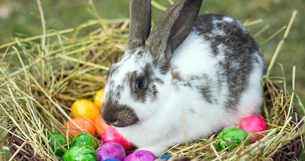 Online vásárlási szokások húsvét idején